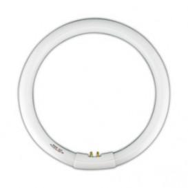 Tubo Fluorescente Circular T9 22W