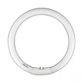 Tubo Fluorescente Circular T5 22W luz Día